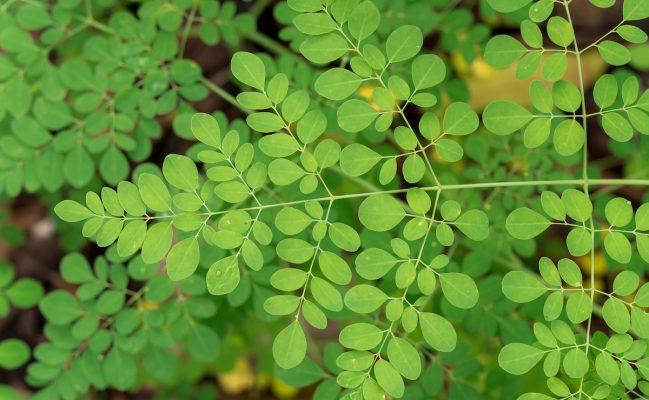 piante afrodisiache