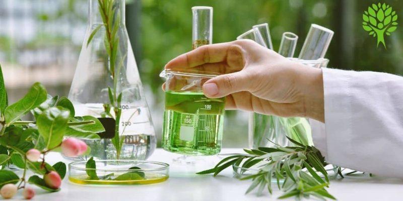 Come riconoscere la qualità della Moringa Oleifera